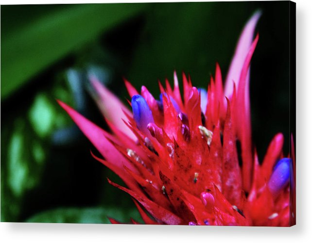 Flower Acrylic Print featuring the photograph Spiked by Toni Hopper
