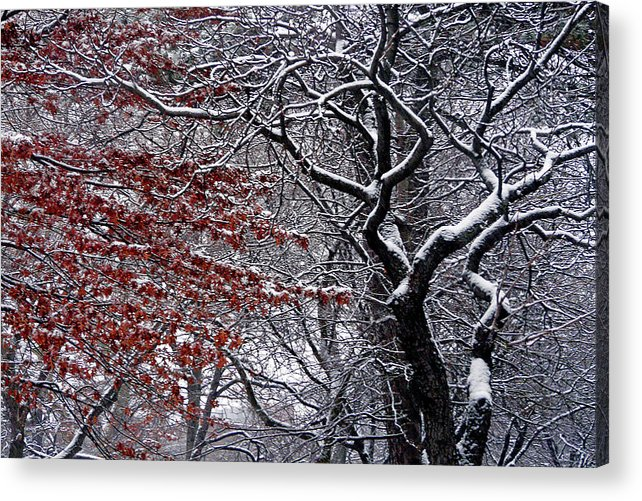Landscape Acrylic Print featuring the photograph Trees by Kendall Eutemey