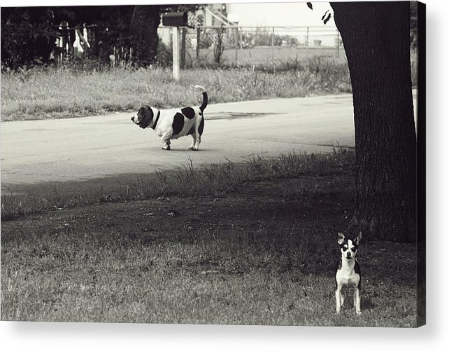 Dogs Acrylic Print featuring the photograph Two Dogs by Toni Hopper