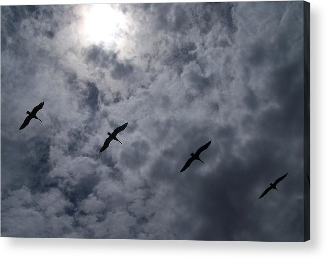 Pelicans Acrylic Print featuring the photograph Pelican Sky by J Leigh
