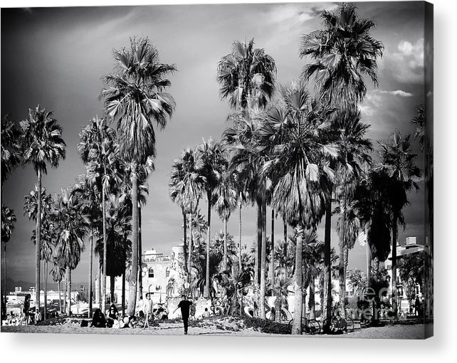 Venice Beach Palms Acrylic Print featuring the photograph Venice Beach Palms by John Rizzuto