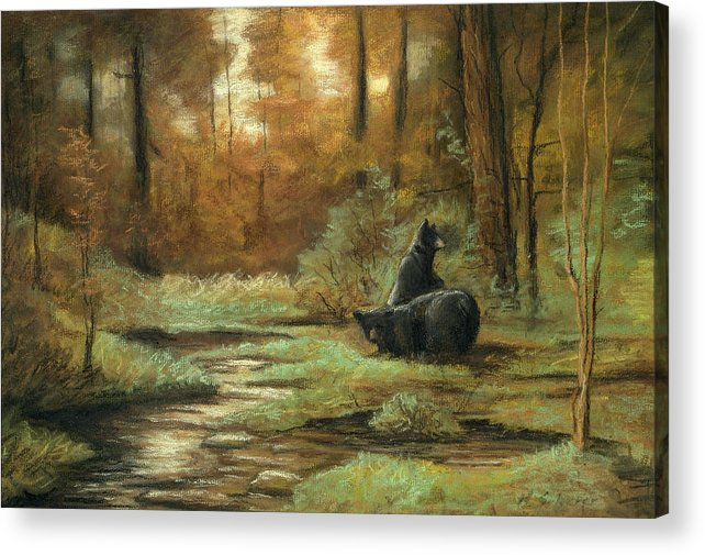 Wildlife Drawing Acrylic Print featuring the drawing Black Bear - Autumn by Michael Scherer