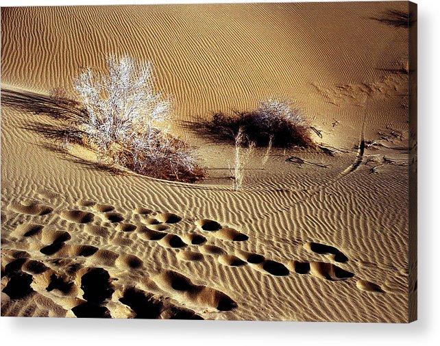 Desert Acrylic Print featuring the photograph Footprints by Robert Shahbazi