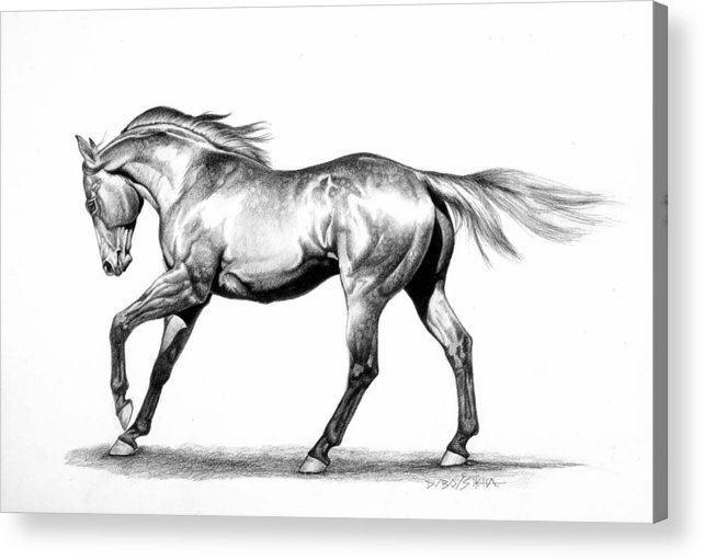 Thoroughbred Acrylic Print featuring the drawing Proud by Howard Dubois