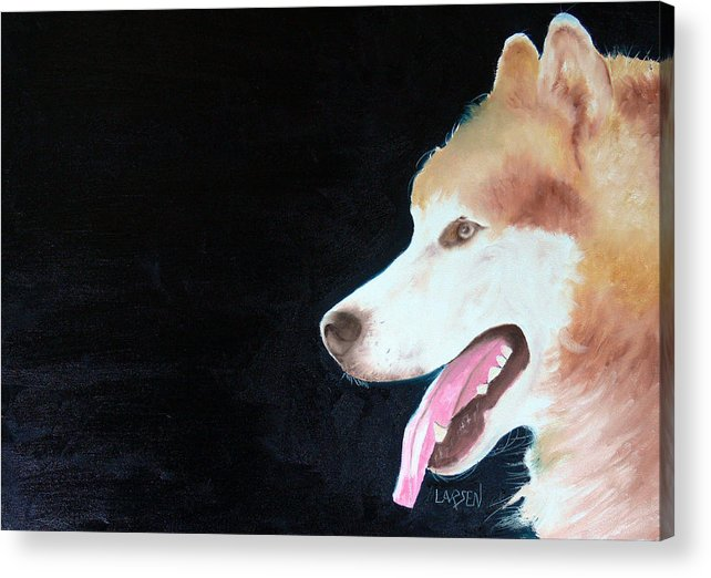 Acrylic Print featuring the painting Alaskan Malamute by Dick Larsen