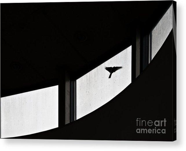 Bird Acrylic Print featuring the photograph Desire by Vadim Grabbe
