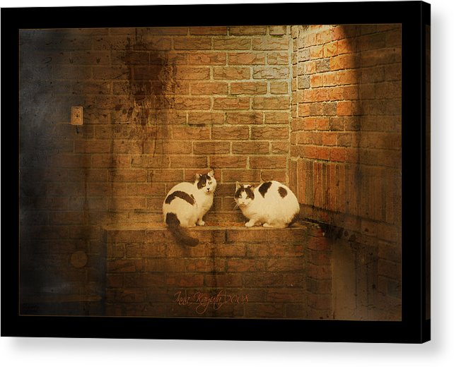Cats Acrylic Print featuring the photograph Spotlight by Inesa Kayuta