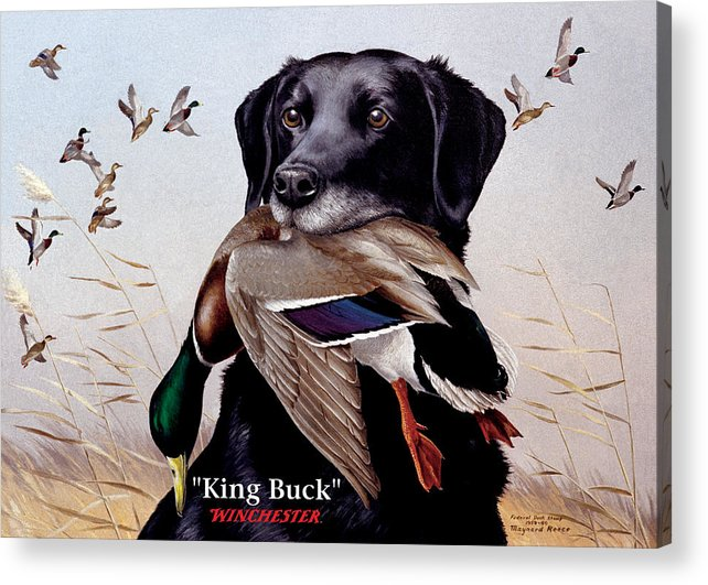 Dog Acrylic Print featuring the painting King Buck  1959 Federal Duck Stamp Artwork by Maynard Reece