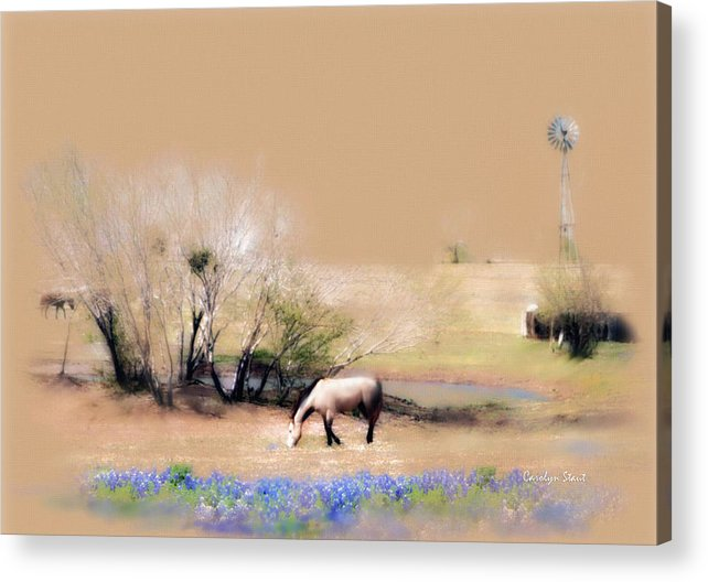 Texas Horses Pasture Bluebonnets Windmill Landscape Acrylic Print featuring the painting Taking It Slow And Easy by Carolyn Staut