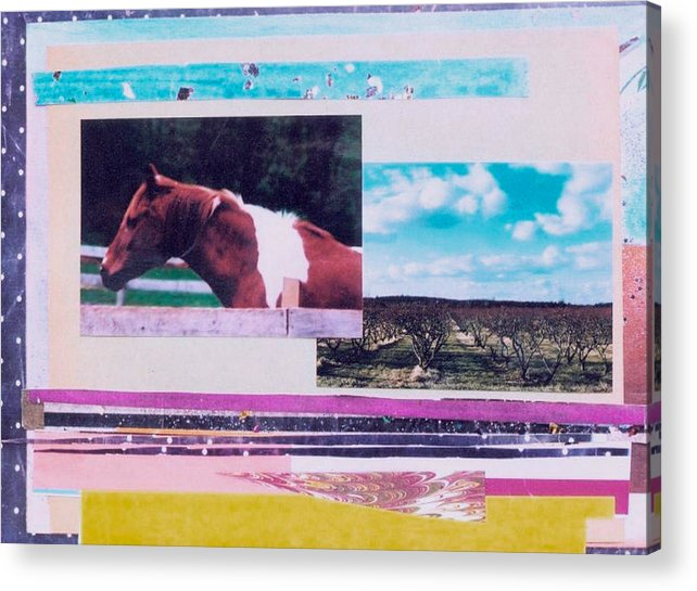 Horse Acrylic Print featuring the photograph Country Collage 5 by Mary Ann Leitch