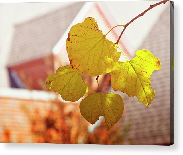 Leaves Acrylic Print featuring the photograph Yellow Leaves by Toni Hopper