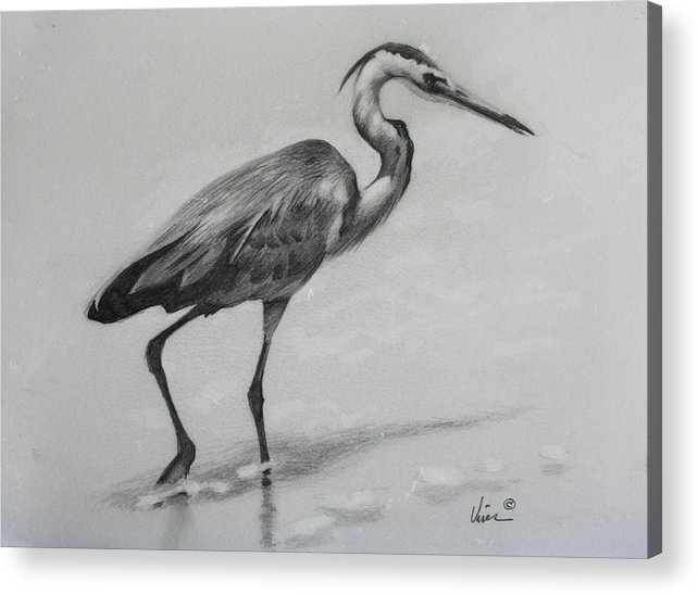 Graphite On Paper Acrylic Print featuring the drawing Wader by Michael Vires