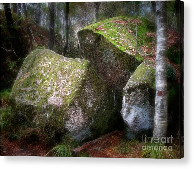 Wood Acrylic Print featuring the photograph Fantasy Woods by Lutz Baar
