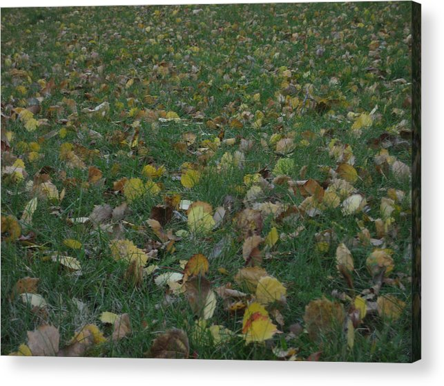 Leaves Acrylic Print featuring the photograph Fall 13 by Jim Lorriman
