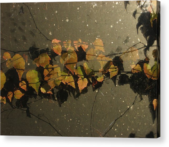 Leaves Acrylic Print featuring the photograph Fall 15 by Jim Lorriman