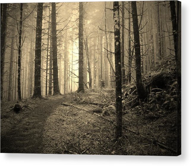 Oregon Acrylic Print featuring the photograph Mystery Path by Amy Norden