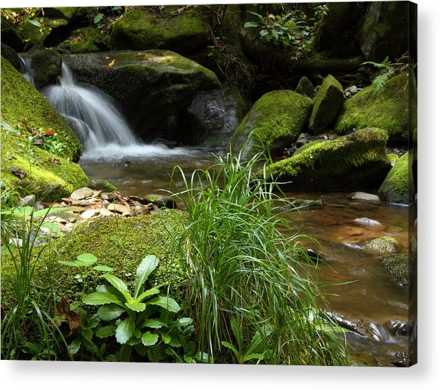 Tennessee Acrylic Print featuring the photograph Moss And Water And Ambience by Andrew McInnes