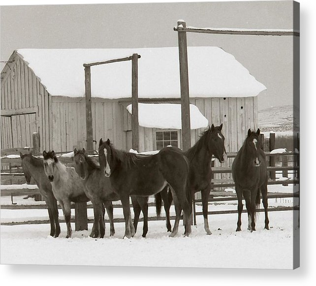 Horses Acrylic Print featuring the photograph 71 Ranch by Diane Bohna