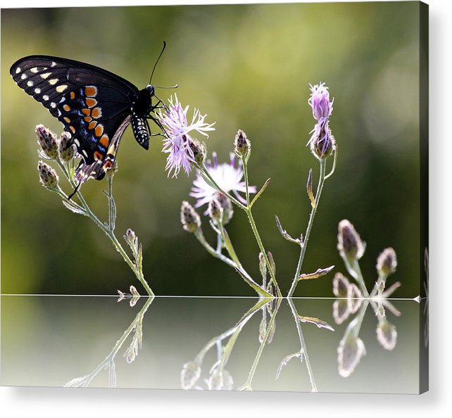 Nature Acrylic Print featuring the photograph Butterfly With Reflection by Eleanor Abramson