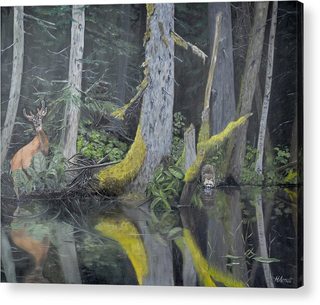 Red Deer And Raccoon Sharing A Watering Hole Acrylic Print featuring the painting Red Deer And Raccoon by Hugh Arndt