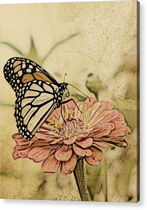 Butterfly Acrylic Print featuring the digital art Painted Beauty by Sally Engdahl