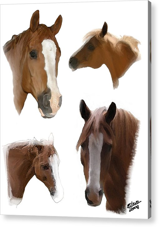 Arabian Horse Acrylic Print featuring the painting The Faces Of T by Elzire S