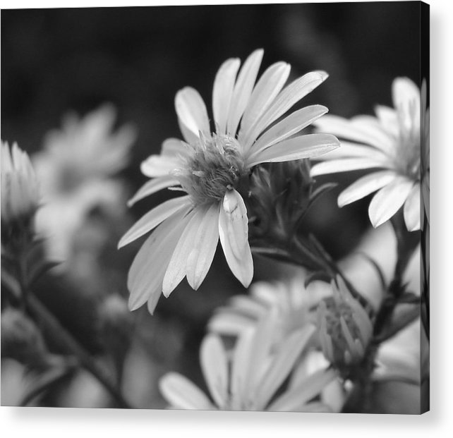 Acrylic Print featuring the photograph Just Black And White by Luciana Seymour