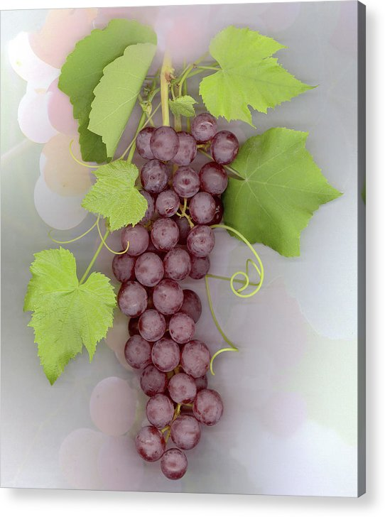 Grapes Acrylic Print featuring the photograph Grapes on Grapes by Sandi F Hutchins