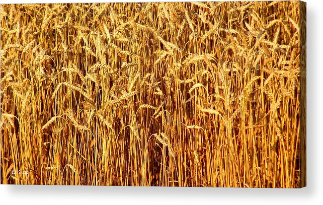 Not Just In Kansas Acrylic Print featuring the photograph Not Just In Kansas by Edward Smith