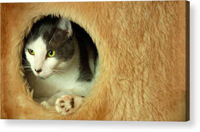 Tommy Acrylic Print featuring the photograph Peekaboo by Mandy Wiltse