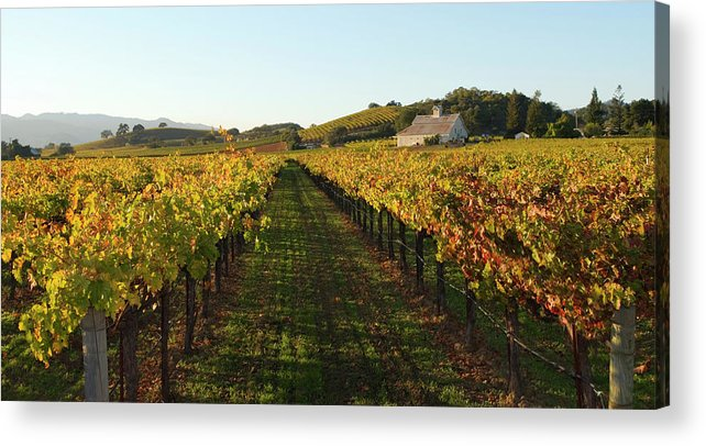 Scenics Acrylic Print featuring the photograph Napa Valley Vineyard In Autumn by Leezsnow
