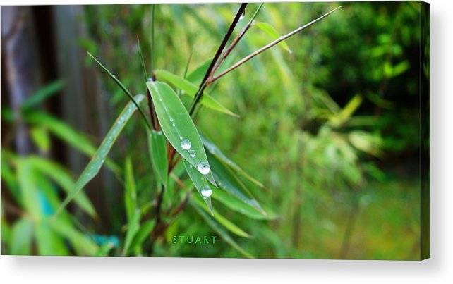 Shades Of Green Acrylic Print featuring the painting Forty Shades Of Green by Charles Stuart