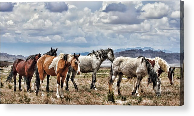 Horse Acrylic Print featuring the photograph The Wild Band by Gene Praag