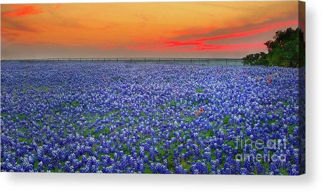 Texas Bluebonnets Acrylic Print featuring the photograph Bluebonnet Sunset Vista - Texas landscape by Jon Holiday