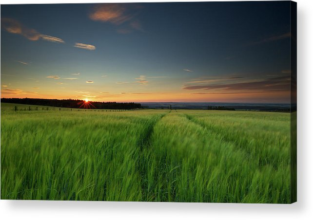 Tranquility Acrylic Print featuring the photograph Swaying Barley At Sunset by By Simon Gakhar