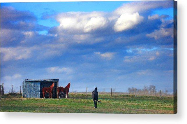Landscape Acrylic Print featuring the photograph Horse Ranch Landscape by Steve Karol