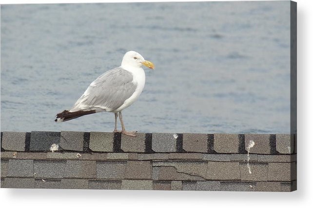 Seagull Acrylic Print featuring the photograph Taking in the View by Jessica Cruz