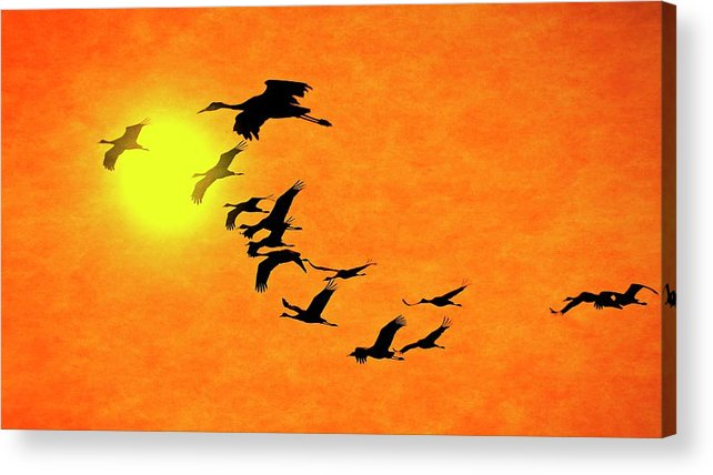 Nature Acrylic Print featuring the photograph Crossing the Sun, Sandhill Cranes by Zayne Diamond Photographic