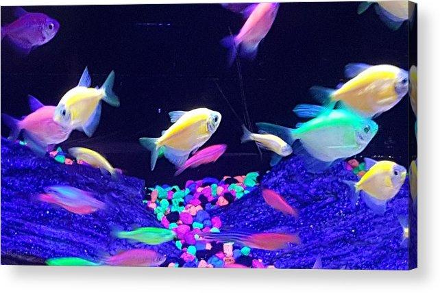 Fish Acrylic Print featuring the photograph Green Fish Yellow Fish 123 by Rob Hans