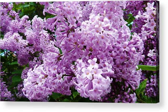 Flower Acrylic Print featuring the photograph Heavenly Beauty by Jeanette Oberholtzer
