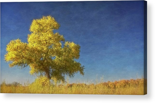 Nature Acrylic Print featuring the photograph Rio Grande Bosque Blue and Gold, New Mexico by Zayne Diamond Photographic