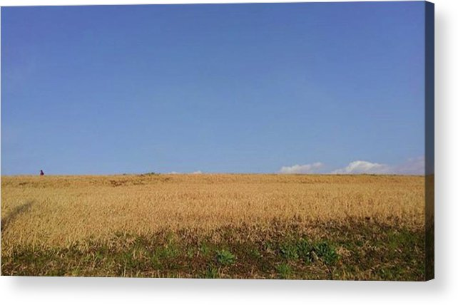 Sunnyday Acrylic Print featuring the photograph Sunnyday by Kumiko Izumi