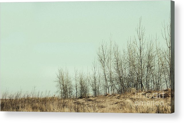 Trees Acrylic Print featuring the photograph The Things We Should Have Done to End Up Somewhere Else by Dana DiPasquale