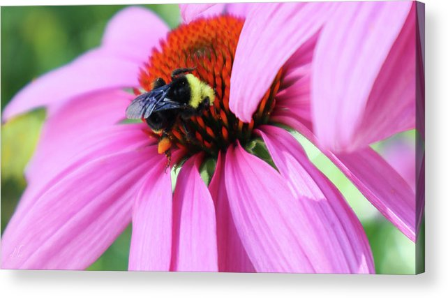 Bee Acrylic Print featuring the photograph A Busy Bee at Work by D Lee