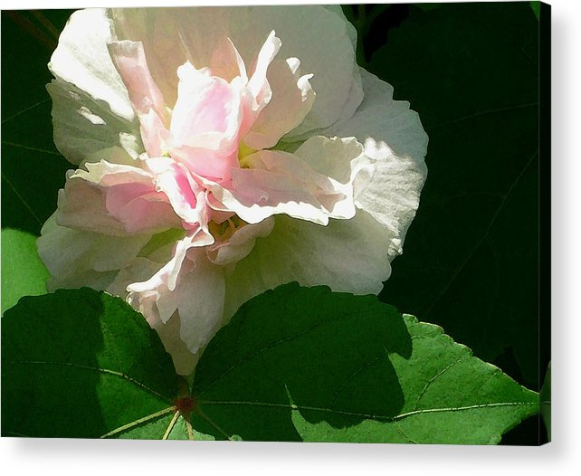China Rose Acrylic Print featuring the photograph China Rose 1 by James Temple