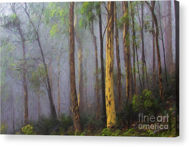 Mist Acrylic Print featuring the photograph Mist in forest by Sheila Smart Fine Art Photography