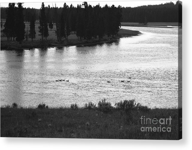 Wildlife Acrylic Print featuring the photograph Dusk at the Yellowstone River by Susan Chandler