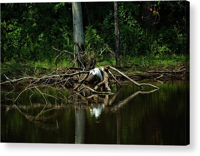 Landscape Acrylic Print featuring the photograph Egret 2 by Ayesha Lakes