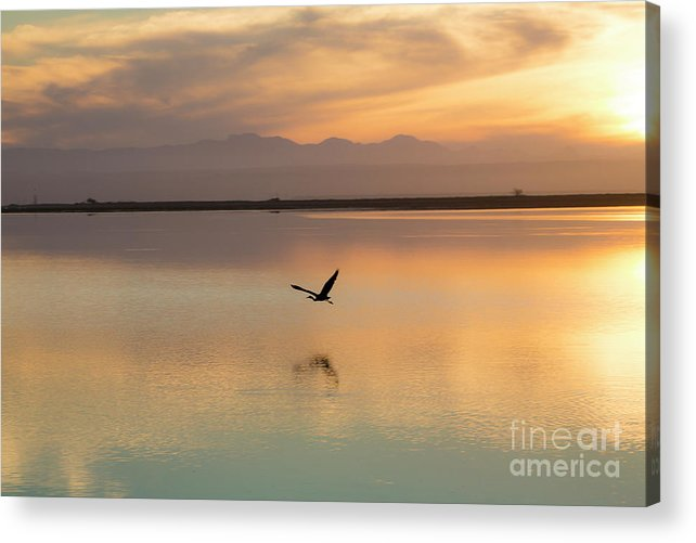 Heron Acrylic Print featuring the photograph Heron at sunset by Sheila Smart Fine Art Photography