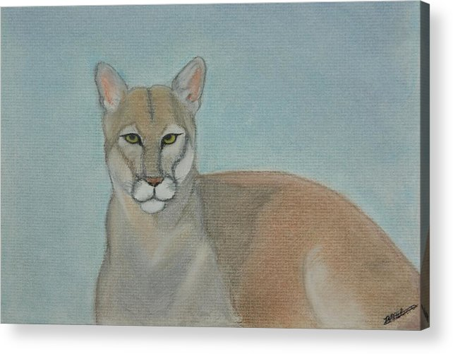 Mountain Lion Acrylic Print featuring the painting Mountain Lion - Pastels - Color - 8x12 by B Nelson